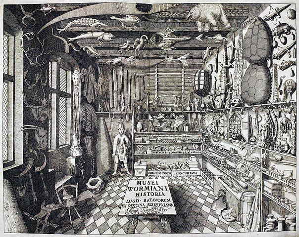 Das Museum Wormianum des Ole Worm, 17. Jh.