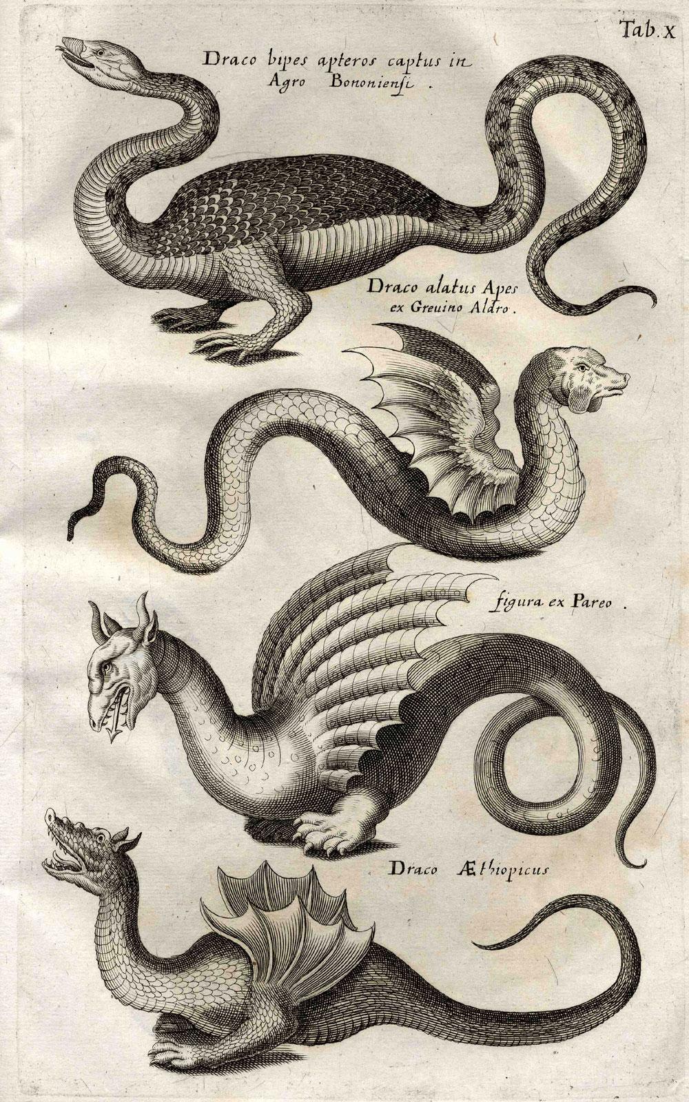 "Drachen in Ulisses Aldrovandis ""Monstrorum historia"", 16. Jh."